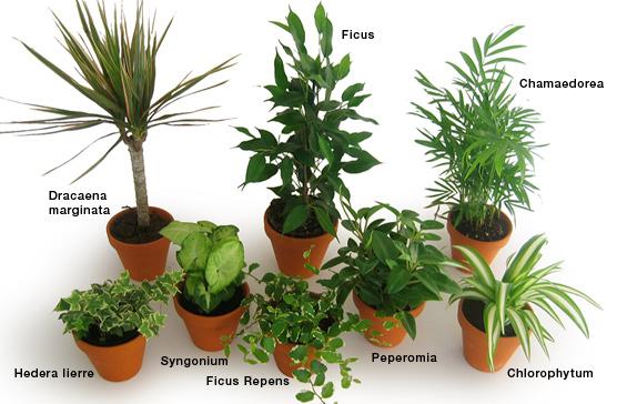 Plantes dépolluantes Rendezvousdeco